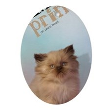 Brown Persian Kitten Oval Ornament