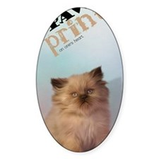 Brown Persian Kitten Decal