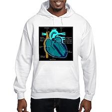 dr heart_diagram lr d Hoodie