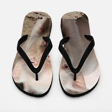 Piglet 001 Flip Flops