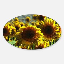 Sunflower Field Decal