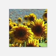 "Sunflower Field Square Sticker 3"" x 3"""