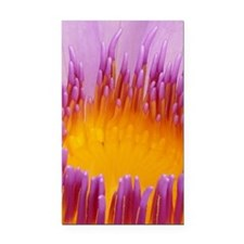 Water lily 004 Rectangle Car Magnet