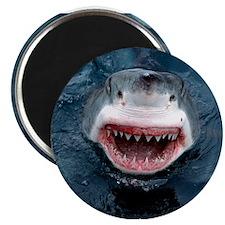 Great White Shark Magnets