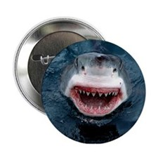 "Great White Shark 2.25"" Button"