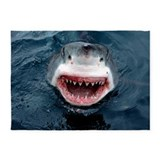 Great white shark 5x7 Rugs