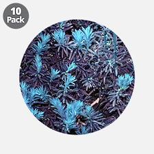 Aqua Blue Abstract Pine Trees Tree Plant Natural B