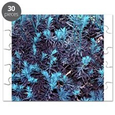 Aqua Blue Abstract Pine Trees Tree Plant Natural B