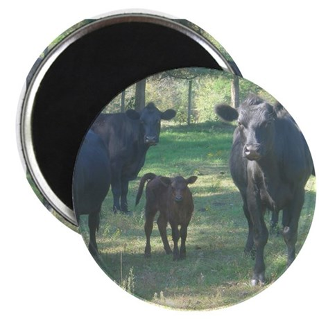 "black angus 2.25"" Magnet (100 pack)"