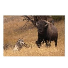 Bull Bison & Wolf Postcards (Package of 8)