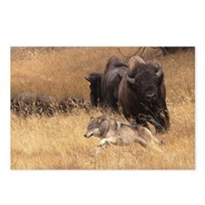 Bull Bison, Female, & Wol Postcards (Package of 8)