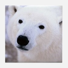 White Polar Bear Tile Coaster