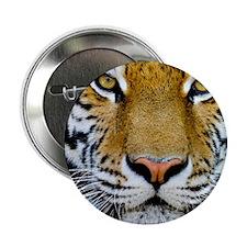 "Tiger 2.25"" Button"