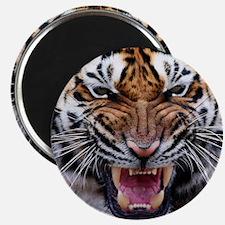 Big Cat Tiger Roar Magnet