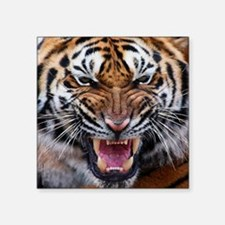 "Big Cat Tiger Roar Square Sticker 3"" x 3"""