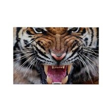 Tiger Mad Rectangle Magnet