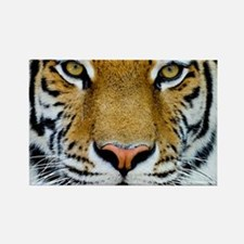 Big Cat Tiger Roar Rectangle Magnet