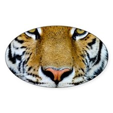 Big Cat Tiger Roar Decal