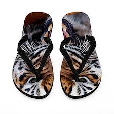 Big Cat Tiger Roar Flip Flops