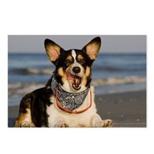 Cute Corgi Licking his Ch Postcards (Package of 8)