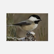 Black- Capped Chickadee Rectangle Magnet