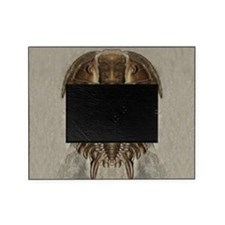Trilobite Fossil Picture Frame
