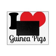 I Love Guinea Pigs Picture Frame