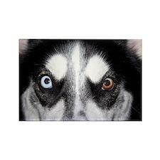 Eyes of a Husky Rectangle Magnet