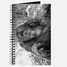Pointing Orangutan Journal
