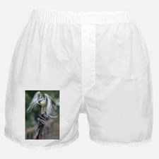 Falconry Boxer Shorts