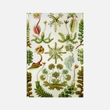 Vintage haeckel art Rectangle Magnet