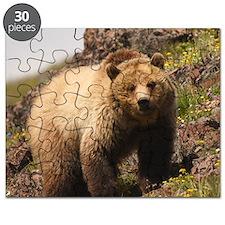 bear Puzzle