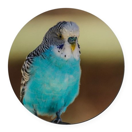 Blue Budgie Round Car Magnet
