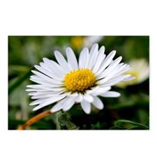 White Flower Postcards (Package of 8)