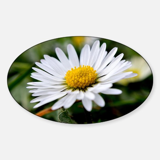 White Flower Sticker (Oval)