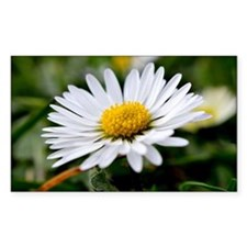 White Flower Decal