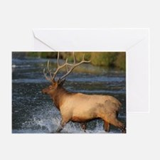 elk splashing in the water Greeting Card