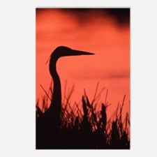 heron Postcards (Package of 8)