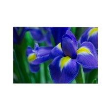 Blue iris Rectangle Magnet