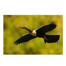 Anhinga in Flight Postcards (Package of 8)