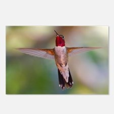 hummingbird in flight Postcards (Package of 8)