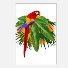 Parrot Postcards (package Of 8)