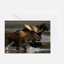 moose splashing in the water Greeting Card