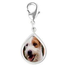 Jack Russell Terrier Dog Ch Silver Teardrop Charm