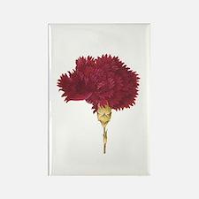 Garnet Carnation Magnets