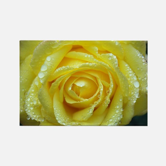 Yellow Rose Rectangle Magnet