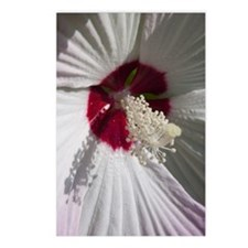 Hibiscus Flower Postcards (Package of 8)