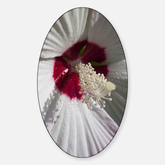 Hibiscus Flower Sticker (Oval)