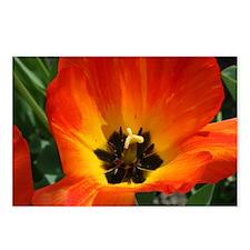 Orange Flower Postcards (Package of 8)