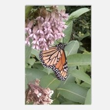 Butterfly Sitting Postcards (Package of 8)